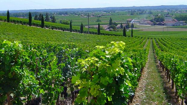 Bordeaux - Não é nome de uva, mas importante região vinífera localizada na França