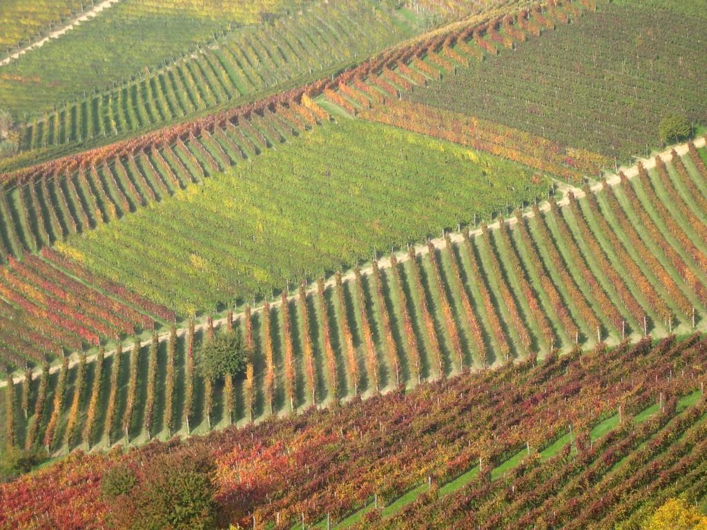 Blog Vinho Tinto e terroir
