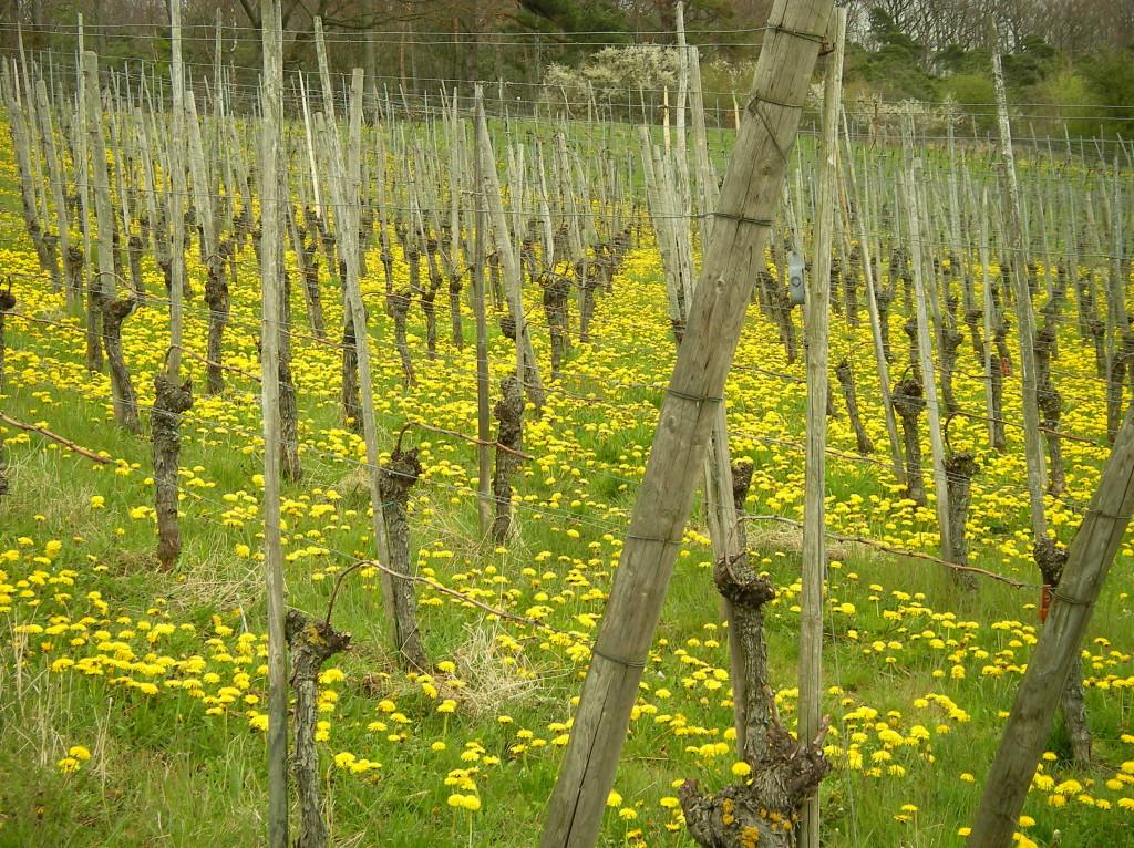 Blog Vinho Tinto explica Terroir