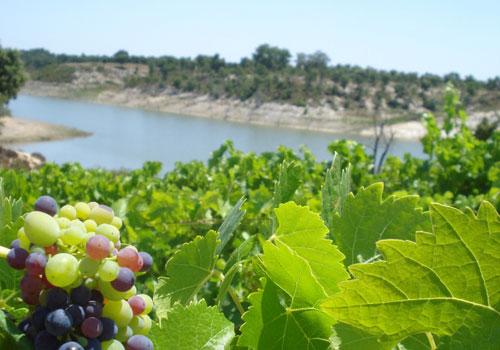 Blog de Vinho e Região do Tejo