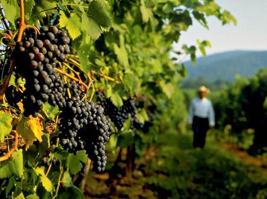 Denominação de origem de vinhos