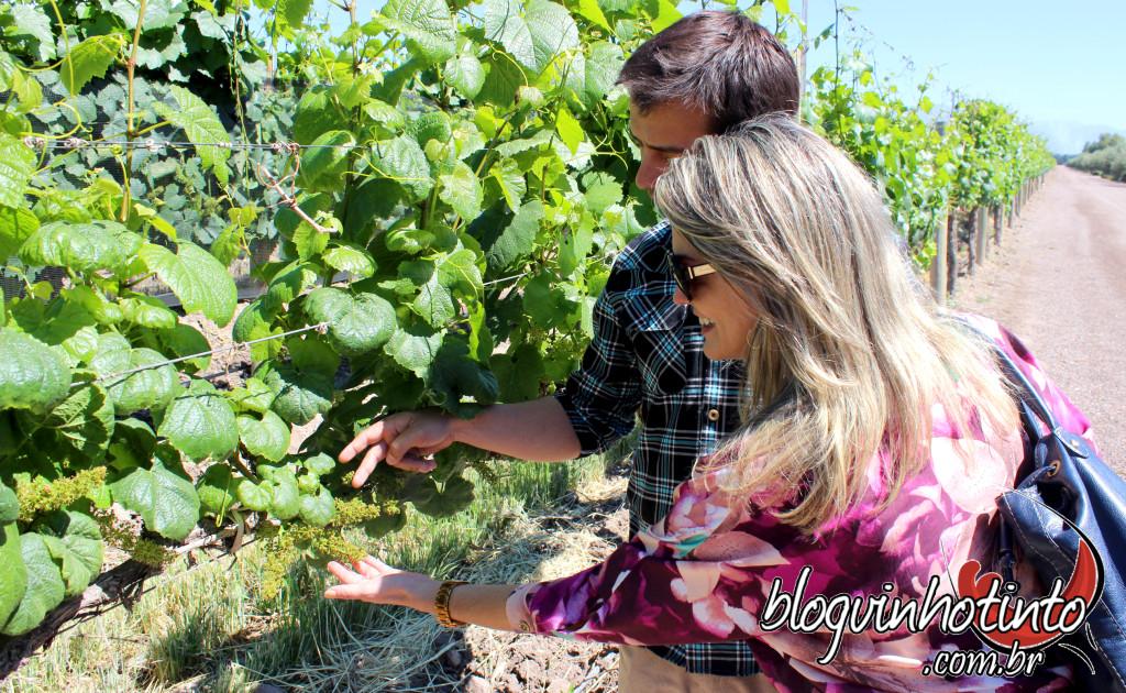 Em Mendonza existem mais de 1200 vinícolas. 120 estão abertas para visitação.