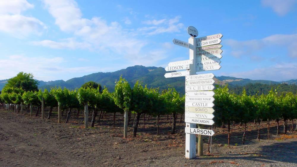 Sonoma: mais de 200 vinícolas