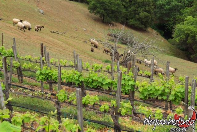 Em razão da topografia e da variedade de solo é possível plantar vários tipos de uva no local