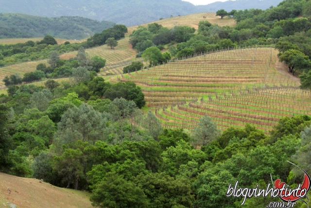 O terreno montanhoso da vinícola foi subdivido em microáreas que respeitam as características dos tipos de uva