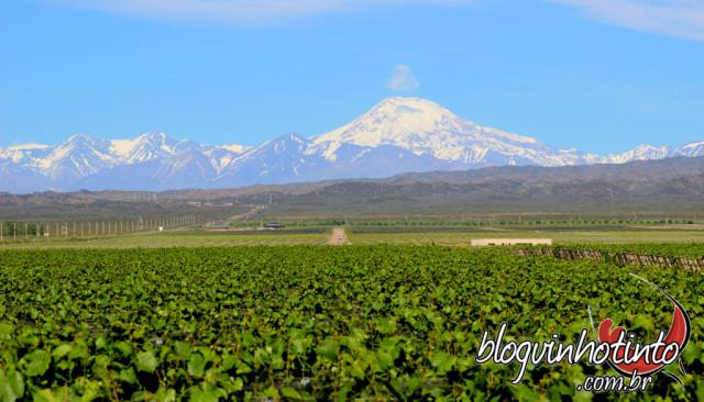 Em Mendoza, as vinícolas se confundem com oásis irrigados no deserto aos pés da belíssima cordilheira dos Andes