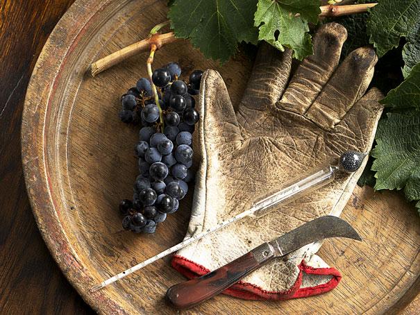 O enólogo se dedica a tudo que envolve à produção do vinho, começando pela escolha do solo e passando pelo plantio, produção, engarrafamento e envelhecimento!