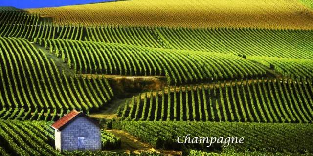 Champagne é o nome em francês da da região da França, onde a técnica da produção da bebida foi aperfeiçoada