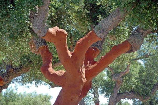 Portugal é o maior fabricante de cortiça do mundo, devido à quantidade de sobreiros existentes no Alentejo.