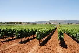 Adega Borba no Alentejo - com vinhos reconhecidos durante o concurso