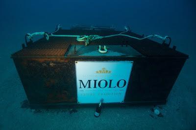 Miolo é a primeira vinícola brasileira a realizar imersão de garrafas em cave submarina