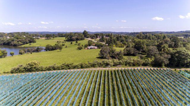 Paisagem vitícola do Vale Central está entre as atrações a serem exploradas pelos enoturistas durante o Dia do Vinho. Foto: Ibravin/Michel Marchetti