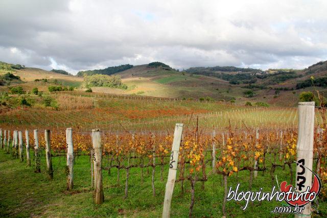Marco Luigi Valduga, começou a cultivar as primeiras videiras do Vale dos Vinhedos