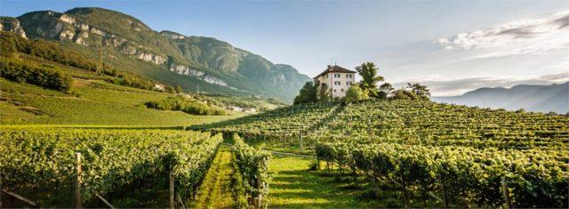 Trentino-Alto-Adige: vinhos brancos excepcionais, com variedades alemãs, austríacas, francesas