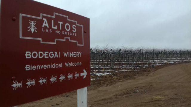 Alto Las Hormigas - uma das mais respeitadas vinícolas da Argentina