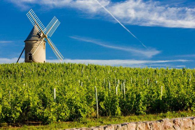 Crus de Beaujolais: Terroir especial no norte da região