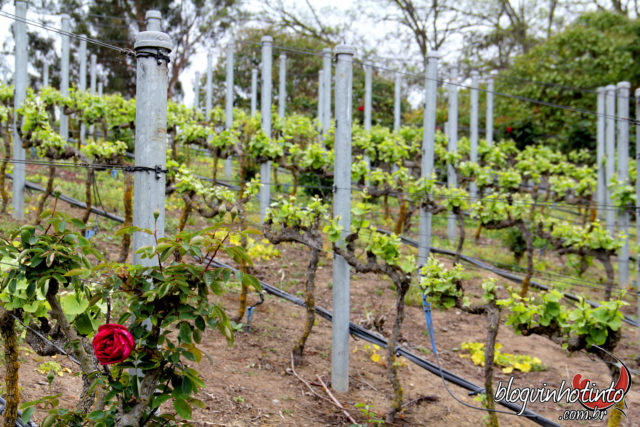 A Loma Larga possui vinhas espalhadas por 148 hectares de vinhedos em Casa Blanca