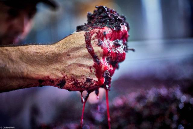 Checking the Ferment at Millbrook, do fotógrafo australiano David Griffen  Na Vinícola australiana Millbrook, o produtor Damian Hutton verifica o progresso da fermentação de uvas vermelhas