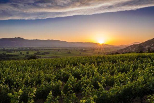 Vinícola de Napa Valley, região que precisará deve adaptar-se à alteração do clima  (FOTO: Reprodução)