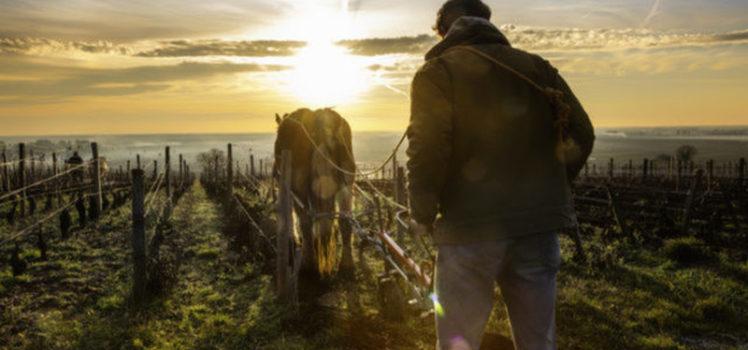Travail Au Cheval, do fotógrafo francês Jerome Genée O lindo nascer do sol nas vinhas de Pernand-Vergelesses, na Borgonha (região da França). Um rapaz prepara o chão com seu cavalo