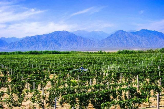 Changyu Pioneer Wine Company, quarta maior produtora do mundo