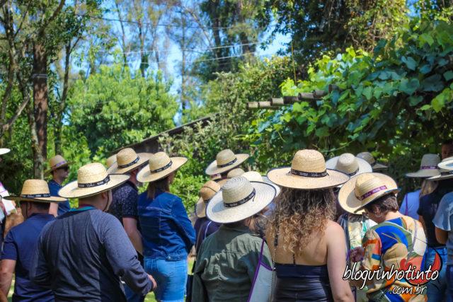 Vindima: diversão para enófilos e turistas curiosos