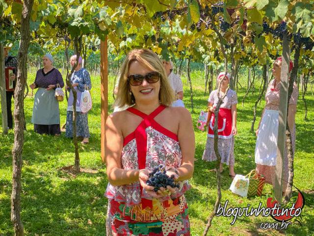 Colheita ao som de música italiana entoada por nonas e zias