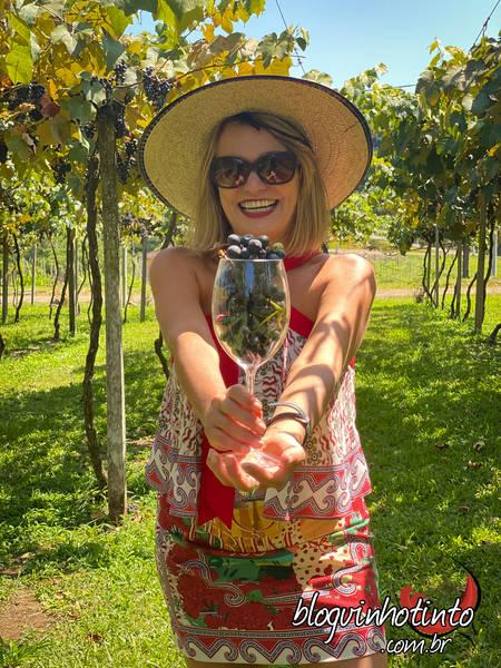 Vindima 2020 na vinícola Cainelle: experiência fantástica