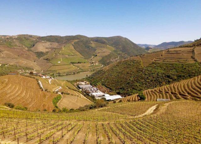 Porto e Madeira são vinhos diferentes
