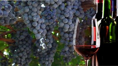 O legado italiano na vitivinicultura brasileira