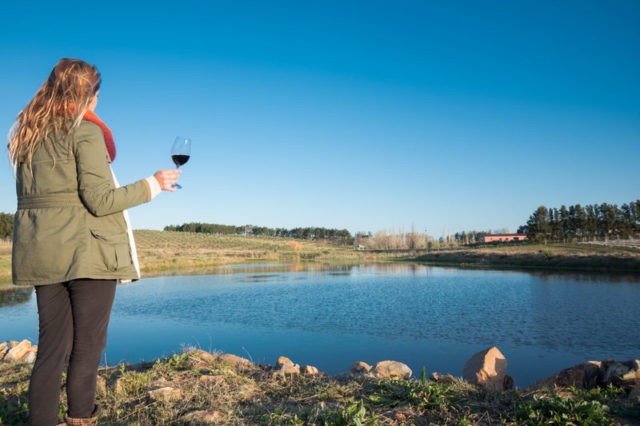 2020: vinho excepcional no Uruguai