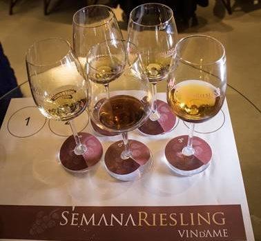Degustação dos vinhos de Uva Riesling