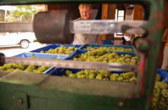 Cristofoli Vinhos